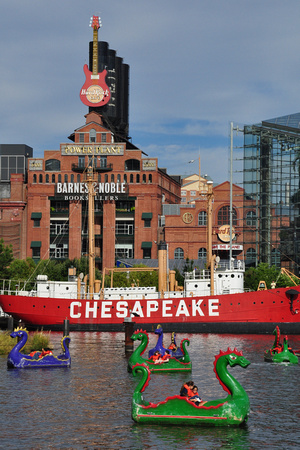Chesapeake Dragons