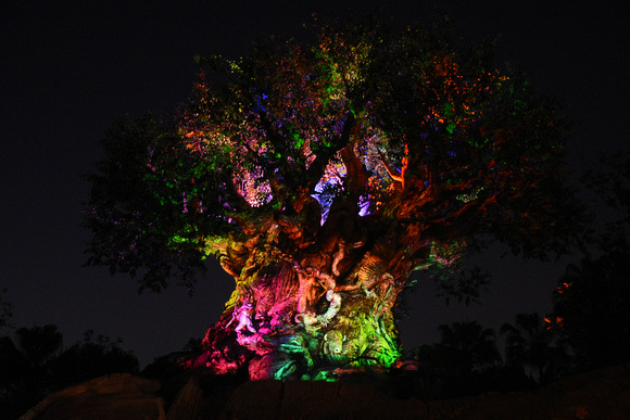 Disney Tree of Life Light Show 01 - Colorful