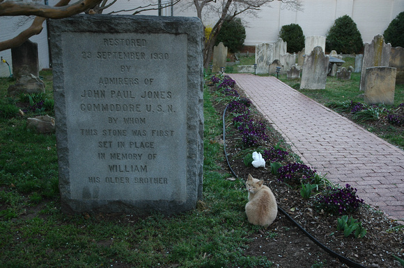 The Cat in the Cemetery 2
