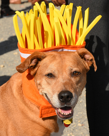 French Fries Dog