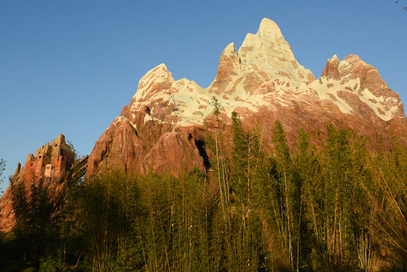 Animal Kingdom Expedition Everest Mountain and Bamboo Forest