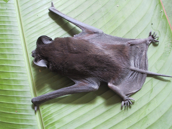 Bat from Above