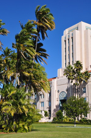 San Diego Administration Building and Palm Tree