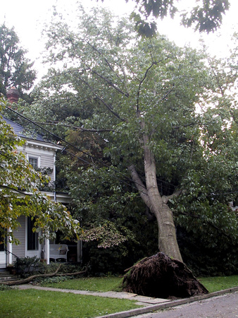 House and Fallen Tree - close-up