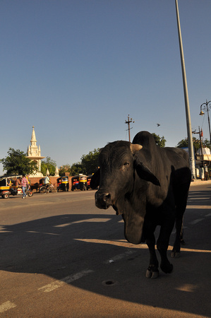 Black Cow and Temple 1